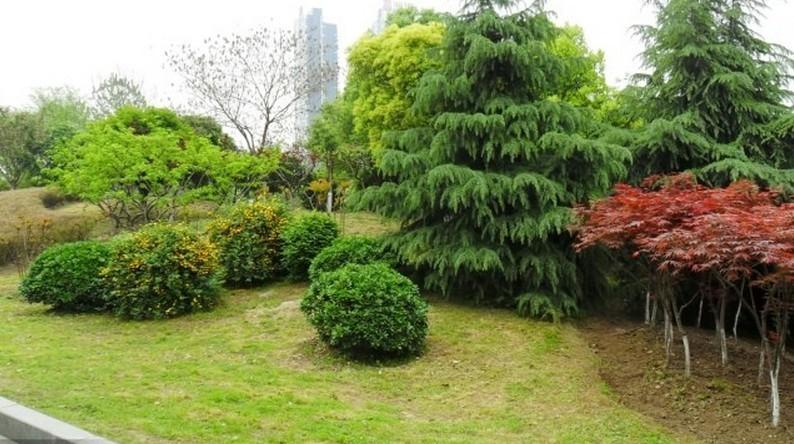 快速提高园林景观设计能力--植物配置中级篇(三)